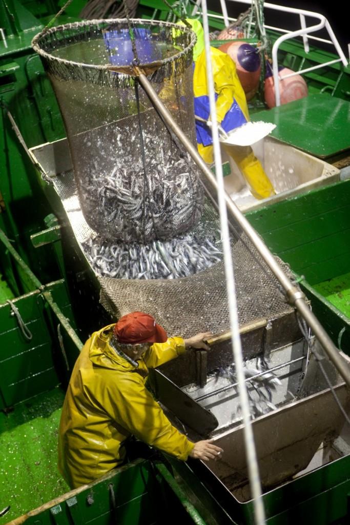 El salabardo se utiliza en la temporada de anchoa del cantábrico para que ésta llegue viva al barco