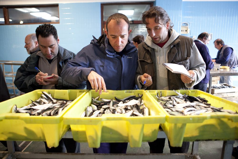 Purcharsers who select the best special anchovies