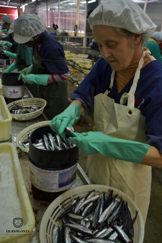Capas de anchoa y sal en plena temporada de la anchoa del Cantábrico