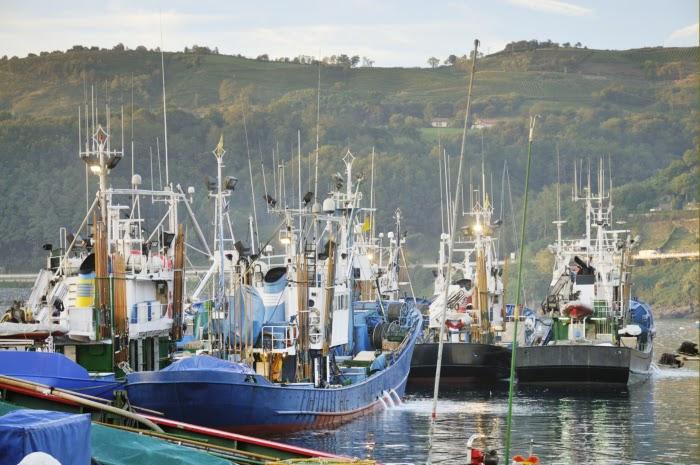 Barcos listos en el puerto para la pesca de bonito del norte y atún rojo del Cantábrico