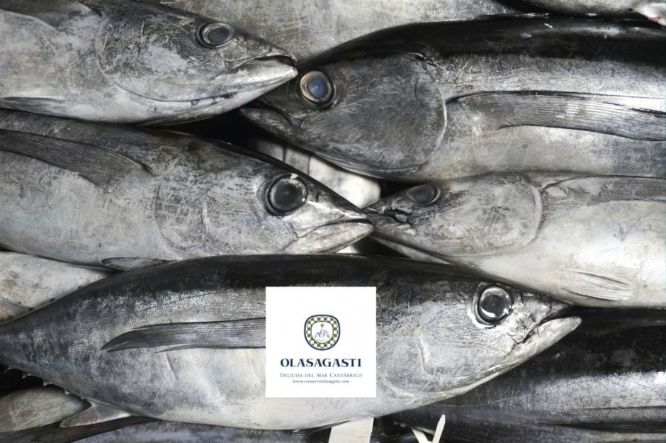 conservas_dentici_the_best_fresh_fish_for_the_best_canned_fish_tuna_basque_country_fishing