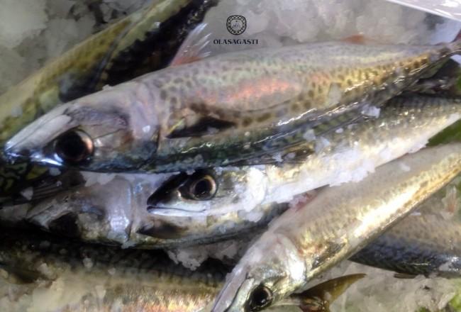 conservas-olasagasti-caballa-del-cantabrico-canned-food-fish-best-quality-macherel-dentici