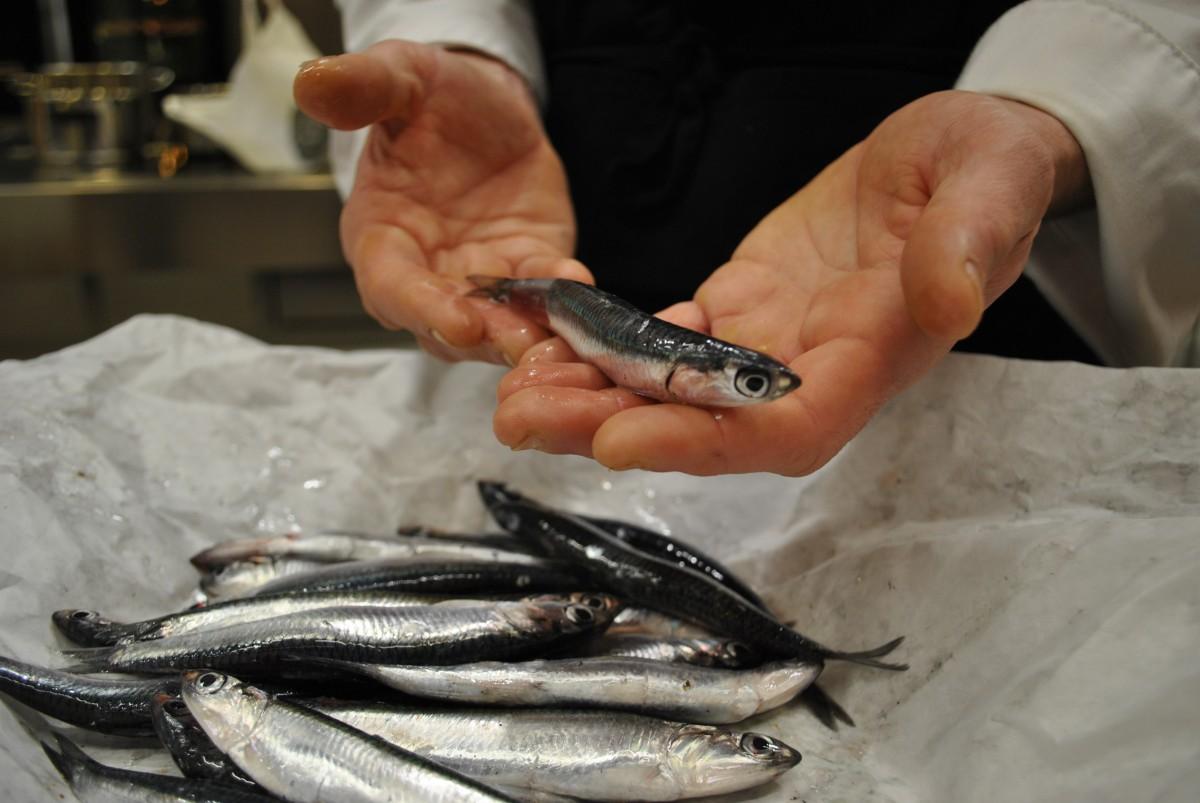 primera anchoa del Cantábrico en las pescaderías