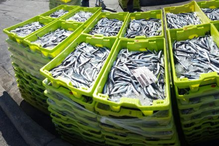 cajas de anchoa del cantabrico