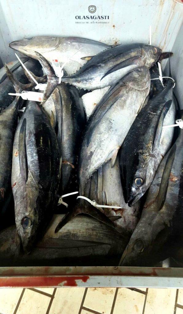 qué bonito nuestro bonito del norte pescado en Getaria