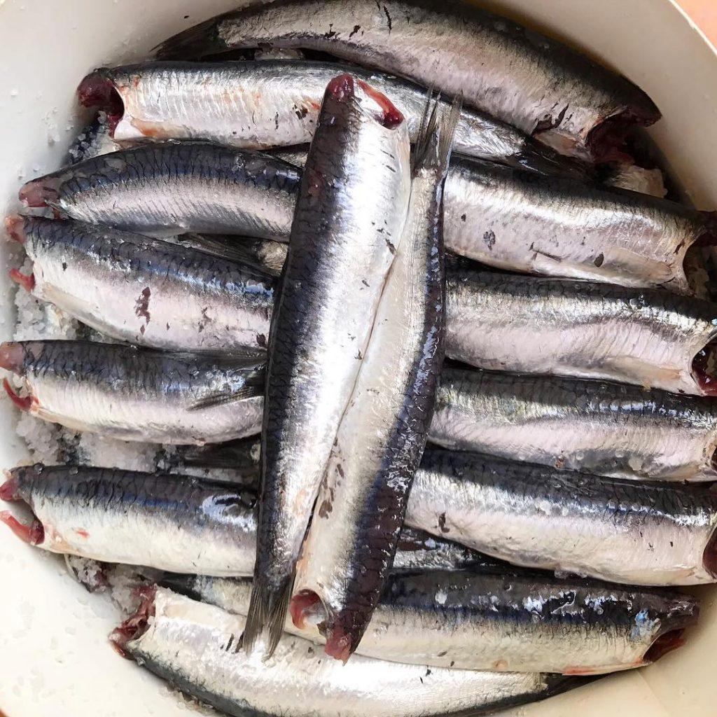 Cmo elaboramos la anchoa del Cantbrico en salazn? Pues igualhellip