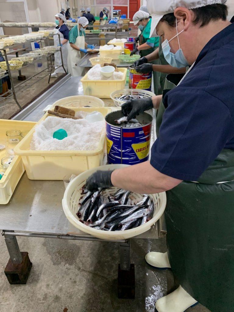 Importancia de la anchoa para la humanidad
